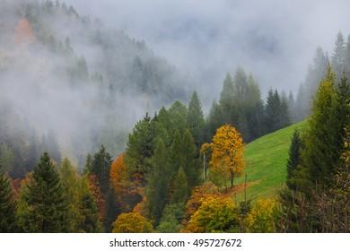 Colorful autumn landscape in the mountain village, morning in Dolimites. Selva di Cadore. Selva di Cadore in the province of Belluno in the Italian region of Veneto,northwest of Belluno.