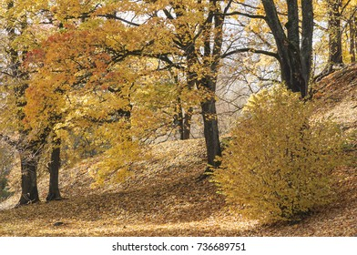 Colorful autumn landscape with Norway maple and small-leaved lime trees of small town park in sunny day