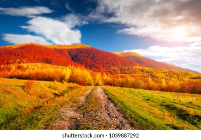 Colorful autumn landscape with old country road. Sunny morning scene in Carpathians, Ukraine, Europe. Beauty of nature concept background. Orton Effect.