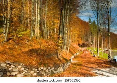 Colorful autumn landscape in the park