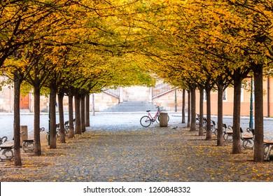 colorful autumn landscape in public garden