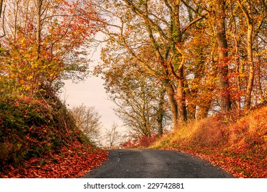 Colorful autumn landscape with a road