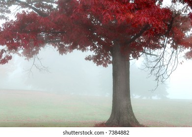 colorful autumn landscape scene in foggy misty morning