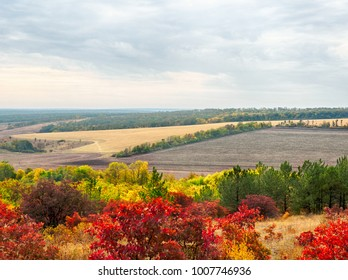 Colorful autumn landscape with views of the skyline and fields . Nature, rural view of pretty farmland and plants in the beautiful surroundings.
