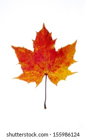 colorful autumn leaf of maple isolated on white