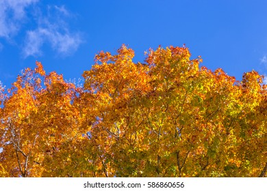 Colorful autumn leaves against a blue sky in northern michigan