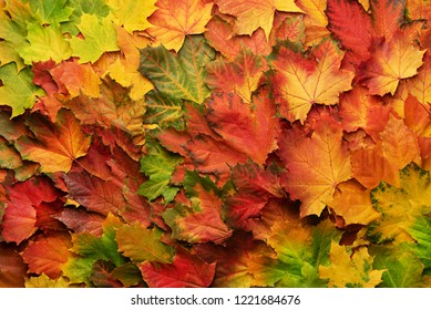 Colorful autumn leaves background with copy space. Cozy fall mood. Season and weather concept.