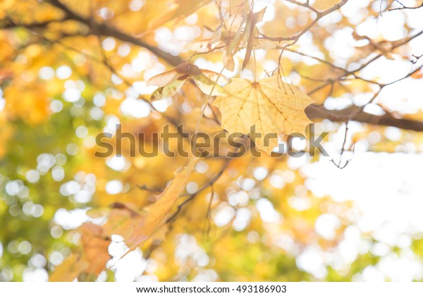 Colorful autumn leaves background.Hello autumn