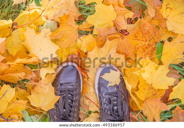 Colorful autumn leaves background.Hello autumn