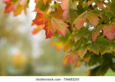 Colorful Autumn Leaves - beautiful background, fall in the forest