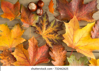 Colorful autumn leaves and chestnuts on wooden table