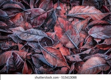 Colorful autumn leaves covered with natural frost. Background layout captured from above (top view). Winter or fall in the garden - flat lay composition.