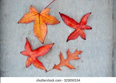 A lot of colorful autumn leaves in the fall with a wooden grey white background with empty copy space