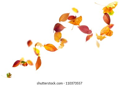 Colorful autumn leaves falling and spinning in the wind on white