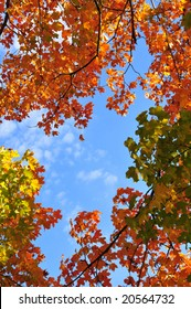 Colorful autumn leaves framing the sky