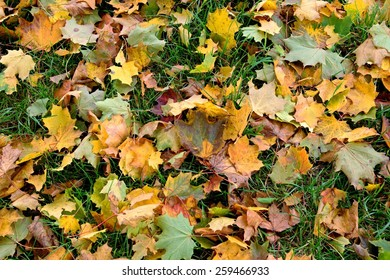 Colorful autumn leaves in the grass