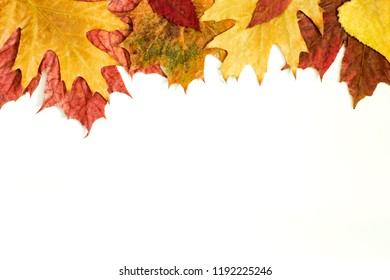 Colorful autumn leaves isoled on a white background