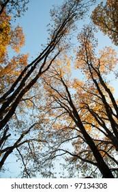 Colorful autumn leaves landscape