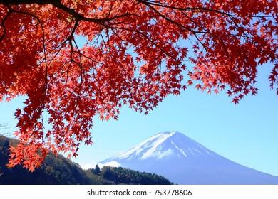Colorful autumn leaves and mount Fuji at Lake Kawaguchi, Yamanashi, Japan.