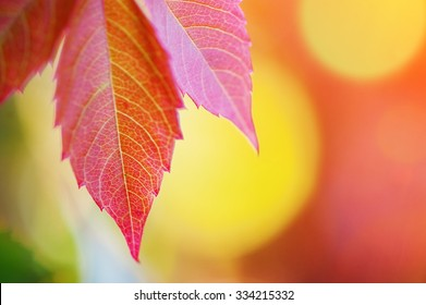colorful autumn leaves. natural background