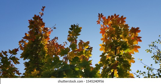 Colorful autumn leaves on branches and blue sky (evening)