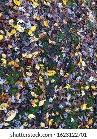Colorful autumn leaves on ground