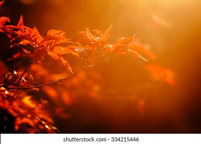colorful autumn leaves on tree branch. natural background