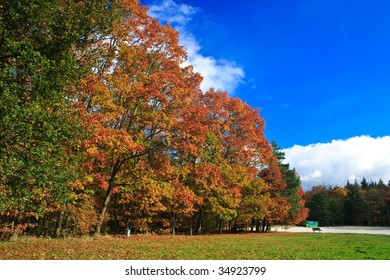 Colorful autumn leaves on trees in a forest