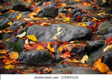 Colorful autumn leaves scattered on rocks in a stream in a close up full frame view conceptual of the fall season