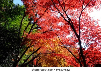 Colorful autumn leaves in the temple grounds