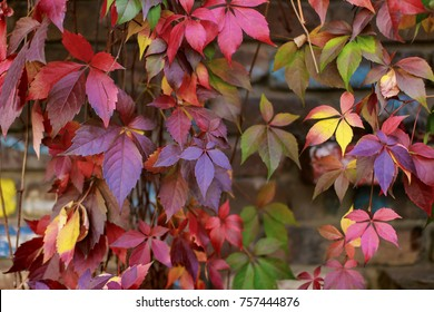 Colorful autumn leaves wall texture