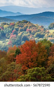 Colorful autumn leaves in West Virginia