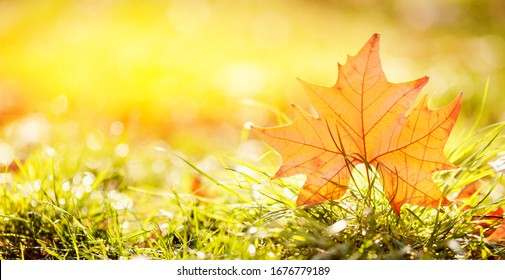 Colorful autumn leaves yellow fall, sun background. Concept Change of season.