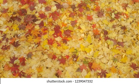 Colorful autumn leaves, yellow, orange, brown leaves on ground in Autumn season (For background and text)