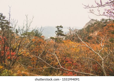 Colorful autumn leaves, yellow, red maple leaves on branches against the sky in the forest, autumn seasonal background