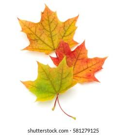 feuille d'érable d'automne colorée isolée sur fond blanc.