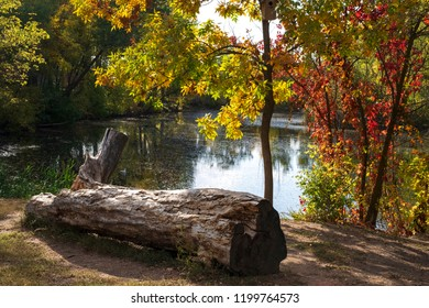 colorful autumn in the park by the lake