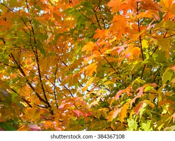 Colorful autumn in Princeton, NJ