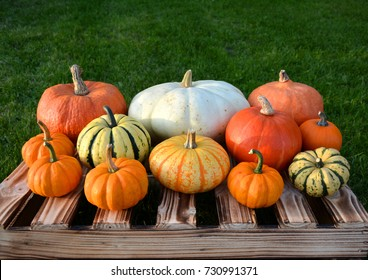 Colorful autumn pumpkins and squashes on the box in garden