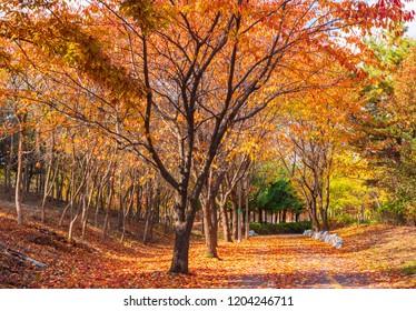 Colorful Autumn road background in Seoul,South Korea
