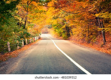 Colorful autumn scene in the mountain forest. Beautiful morning view in Carpathian mountains, Ukraine, Europe. Travel concept background.