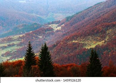 colorful autumn scene, multicolor trees on the slope of mountain on background ukrainian village, wonderful nature season, Ukraine, Europe, Carpathians, Huzul region