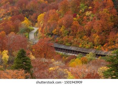 Colorful autumn season at Hachimantai mountain area, Tohoku, Japan.