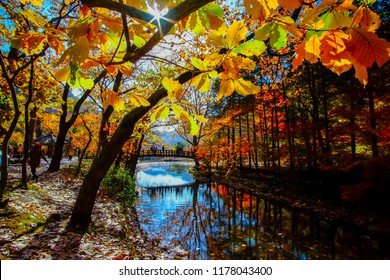 Colorful autumn season in South Korea. Beautiful leafs with eflection during autumn seaon at Naejangsan national park, South Korea.
