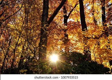 colorful autumn  with sunlight