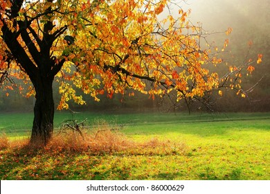Colorful autumn tree brightened with direct sun beams