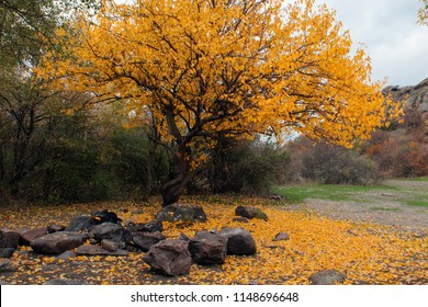 Colorful autumn tree with yellow leaves
