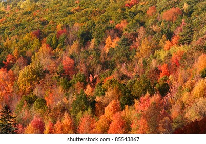 Colorful autumn trees in dense Allegheny national forest