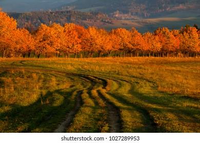 Colorful Autumn trees landscape