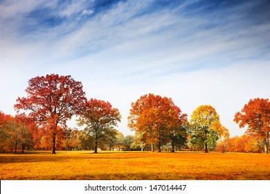 Colorful autumn trees landscape fall season